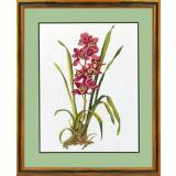 Eva Rosenstand Stickpackung 14-155 Rote Orchideen 40x50